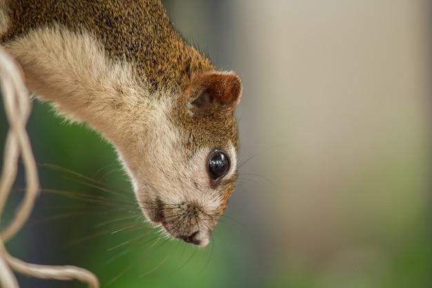 Eyes of the squirrel cherche quelque chose d'intéressant