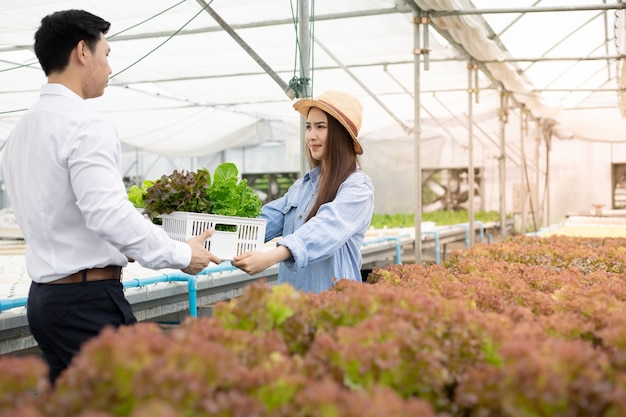 Les fabricants envoient des paniers qui ne contiennent que des légumes biologiques propres et de qualité provenant d'une ferme hydroponique pour les consommateurs souriants. les consommateurs reçoivent des paniers de légumes frais de la ferme hydroponique.
