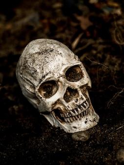 En face du crâne humain enfoui dans le sol avec les racines de l'arbre sur le côté.