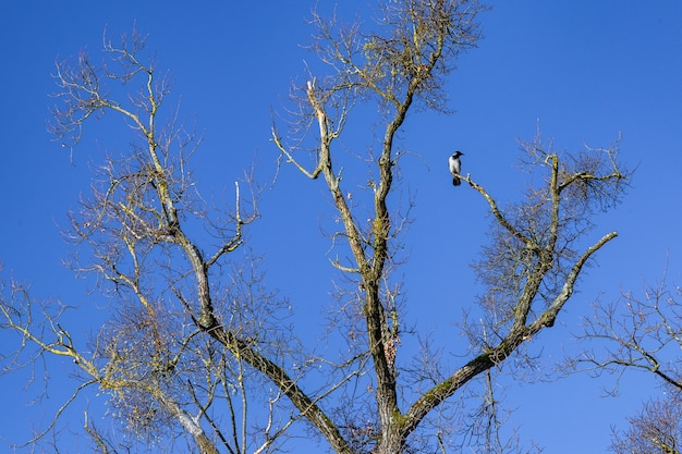 Faible angle d'un oiseau corbeau reposant sur une branche d'arbre dans le parc maksimir à zagreb, croatie