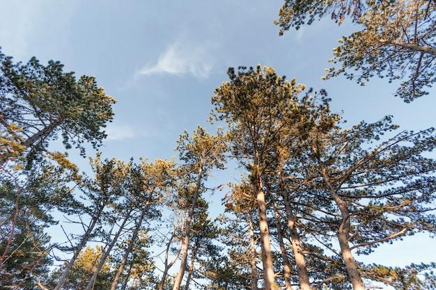 Faible angle de vue de beaux arbres