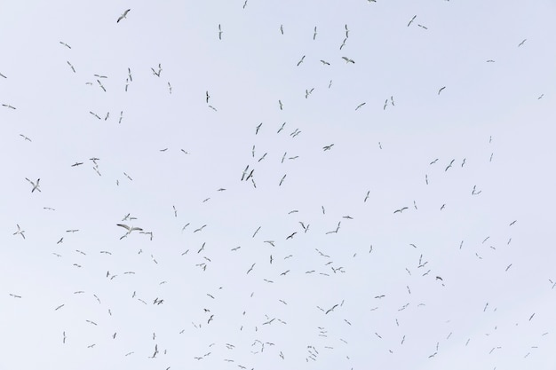 Faible angle de vue de mouettes volant dans le ciel