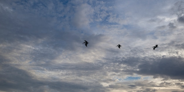 Faible angle de vue des oiseaux qui volent dans le ciel, zihuatanejo, guerrero, mexique