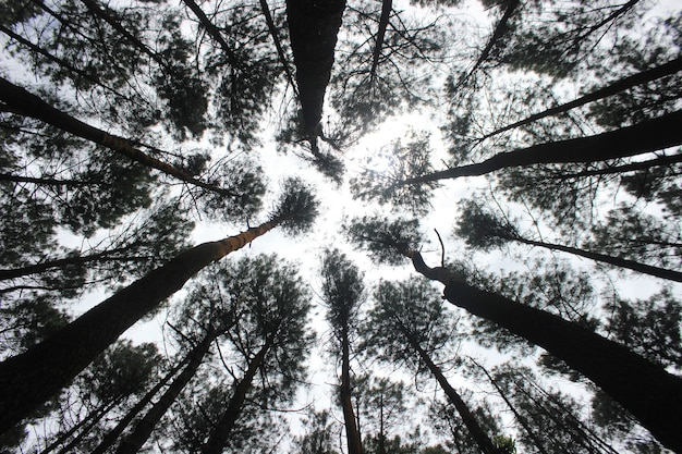 Faible vue des arbres de la multitude