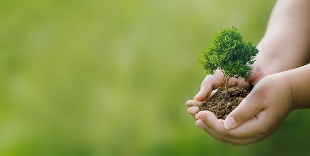 Faire de la rse en plantant des arbres, un concept de rse et une entreprise en plantant des gaules d'arbres.