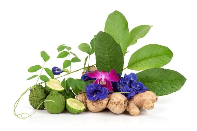 Faire tremper les cheveux avec des fleurs de pois papillon, des feuilles de goyave, du gingembre et du citron vert kaffir isolés sur une surface blanche.