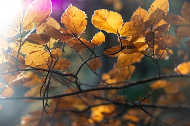 Faisceau lumineux entre les feuilles d'automne