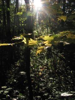 Faisceaux lumineux forestiers