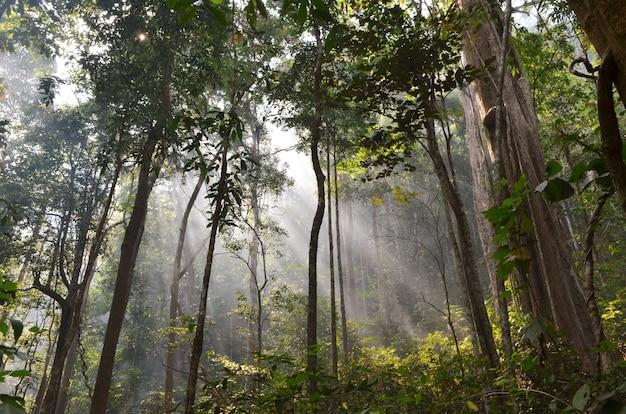 Les faisceaux solaires faisant le chemin à travers un brouillard