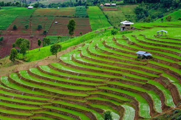 Famille d'accueil traditionnelle au milieu des rizières sur les terrasses de ban pa bong piang à chiangmai