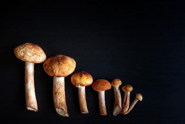 Famille de champignons sur fond noir. champignons forestiers comestibles, espace copie. cadeaux forestiers, cueillette d'automne et récolte de champignons forestiers sauvages.
