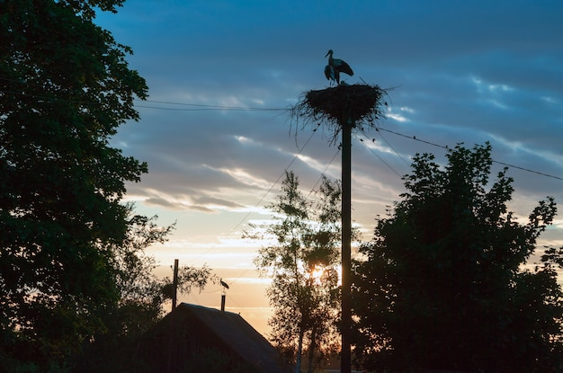 Une famille de cigognes dans leur nid, assis haut sur un poteau au coucher du soleil dans la soirée.