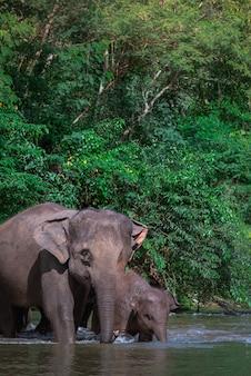 Famille d'éléphants dans l'eau