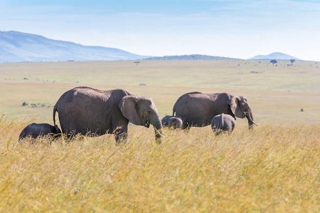 Famille d'éléphants marchant dans la savane