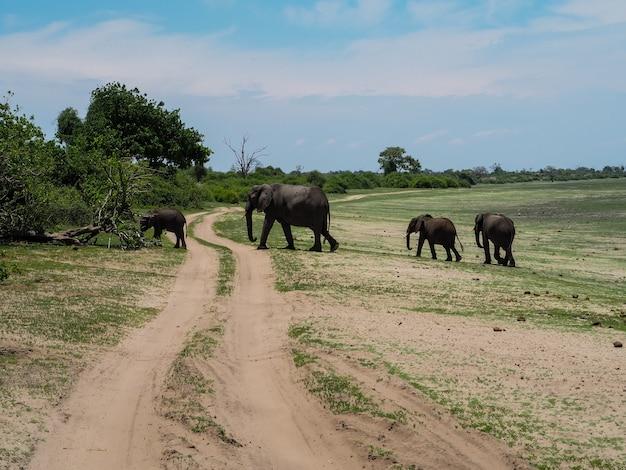 Famille d'éléphants marchant vers la forêt à travers la route non pavée dans leur habitat