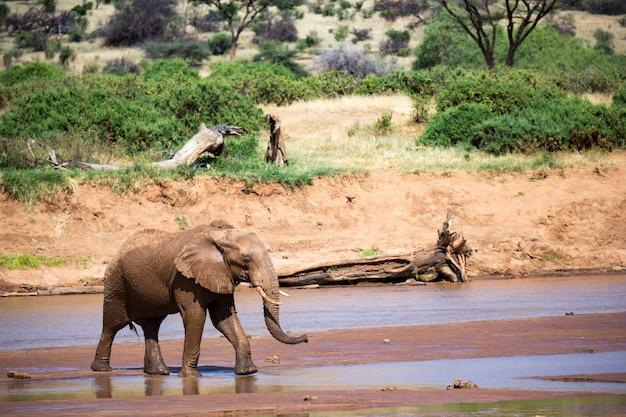 Famille d'éléphants sur les rives d'une rivière au milieu du parc national