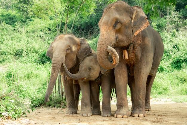 Famille d'éléphants thaïlandais