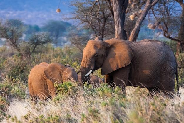 Famille de petits éléphants. kenya, afrique