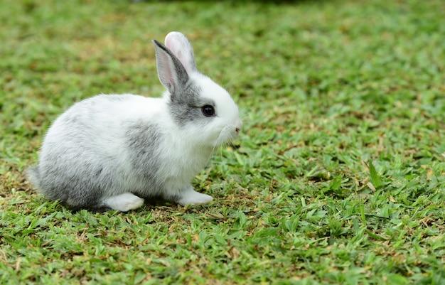 La famille rabbit est venue jouer à green lawn