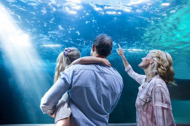 Famille, regarder, aquarium
