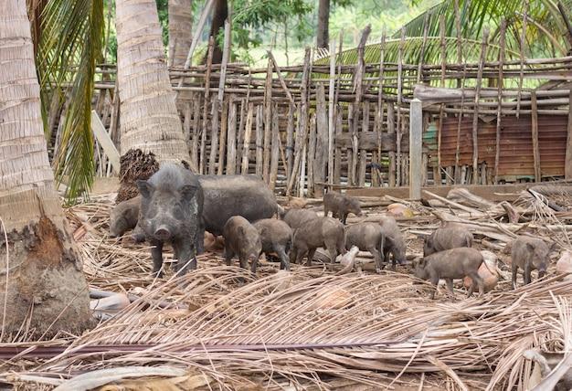 Famille de sangliers sur une ferme rurale