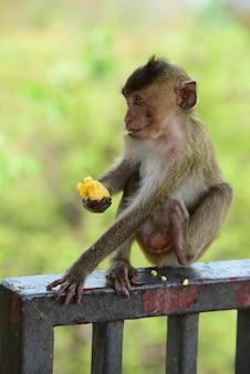 La famille des singes a une mère singe et un bébé singe mignon.