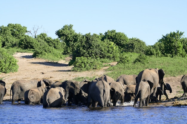 Familyfield avec des éléphants