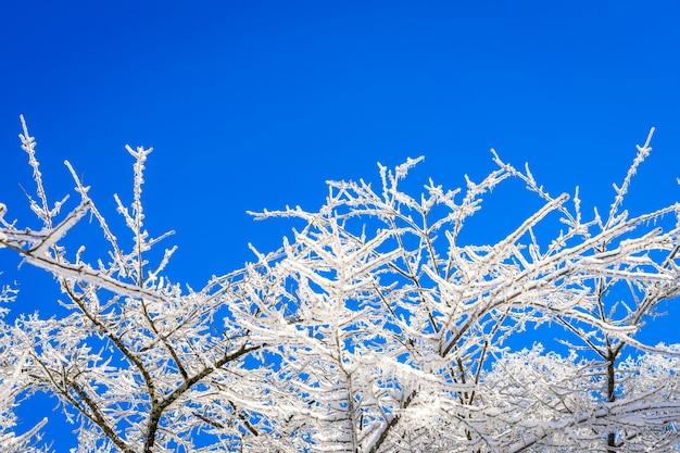 Fantastique ligne de nuage de décembre de conte de fées