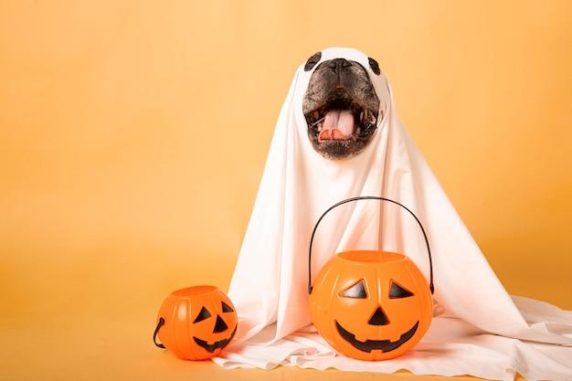 Fantôme drôle de chien avec une citrouille d'halloween dans un studio photo