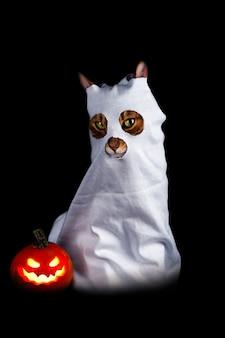 Fantôme mignon sur fond noir - chat en costume de fantôme, tir vertical
