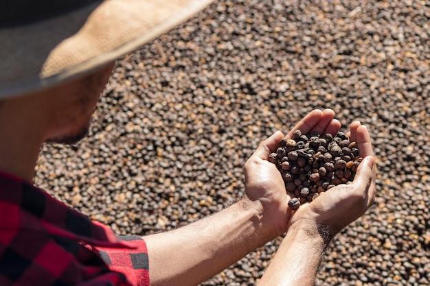 Farmer holding grain de café séché