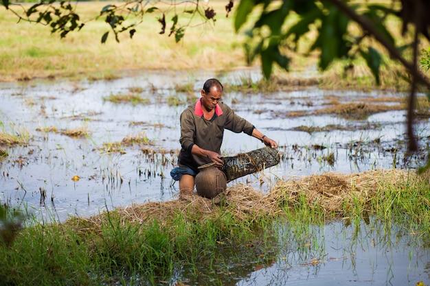Farmer style de vie thaïlandais. les agriculteurs thaïlandais sont des pièges à poissons dans les rizières.