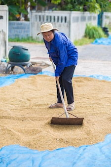 Farmer style de vie thaïlandais. les agriculteurs thaïlandais utilisent des zones de plantation sèches pour sécher leurs graines.