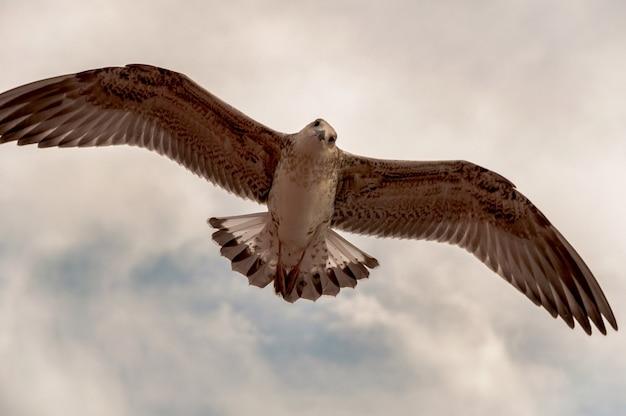 Le faucon est en vol