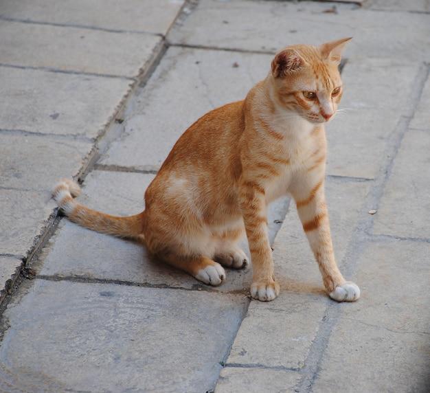Faune de la ville. chat rouge se promenant assis sur le trottoir. animaux mignons