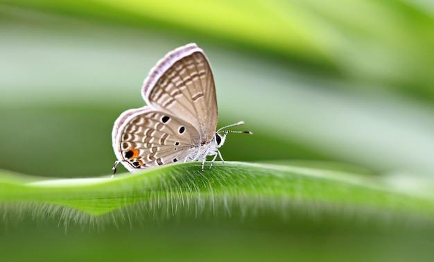 Fauve de papillon sur les feuilles vertes.