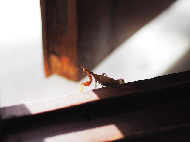 Femelle de mante pour donner naissance à une nouvelle vie.