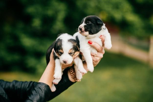 Femelles mains tenant des chiots nouveau-nés à la nature