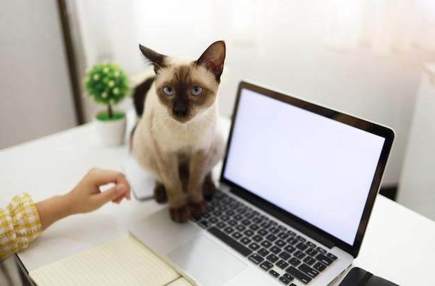 Femme affaires, travailler maison, à, chat