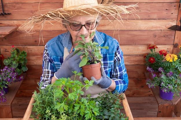 Une femme âgée avec un chapeau de paille s'occupe des nouvelles plantes. de nombreux pots d'herbes aromatiques fraîches et de fleurs de saison. fond et table rustiques en bois