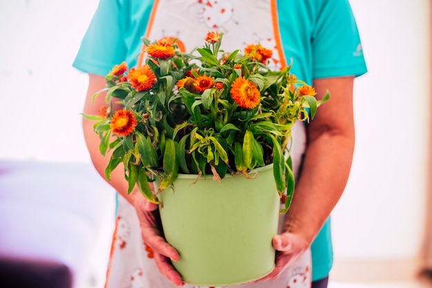 Femme âgée montrant un pot avec une plante avec beaucoup de fleurs à l'intérieur - années 60, femme à la retraite et mature à la maison - style de vie de jardinier