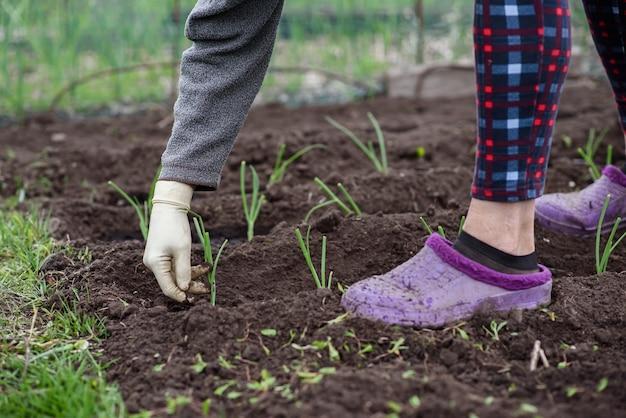 Une femme âgée plante de jeunes plants d'oignons dans son jardin du village