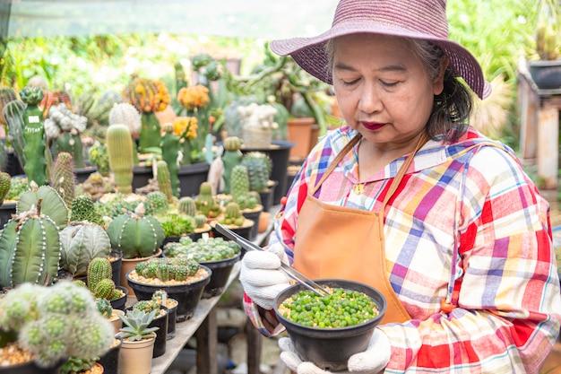 Femme âgée, regarder, intégrité, de, cactus, arbre