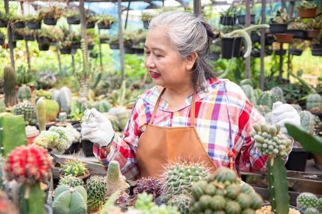 Une femme âgée utilise une pince tirant les mauvaises herbes du pot de cactus