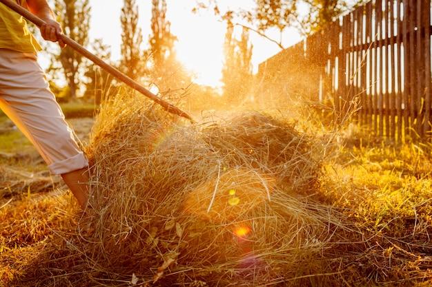 Femme d'agriculteur rassemble le foin avec une fourche au coucher du soleil dans la campagne.