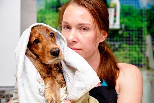 La femme avec amour sèche l'épagneul anglais avec une serviette