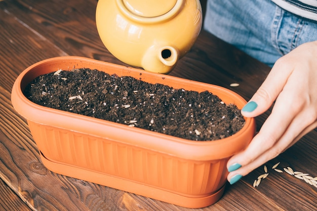Femme arrosant les graines dans un pot de fleurs