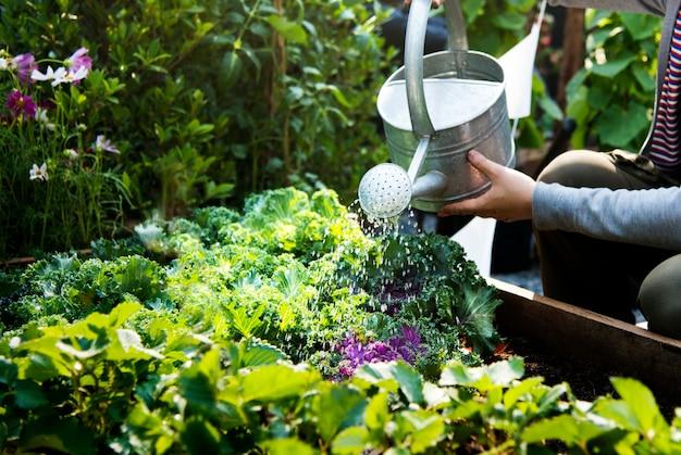 Femme arrosant les plantes