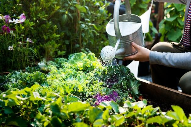 Femme arrosant des plantes