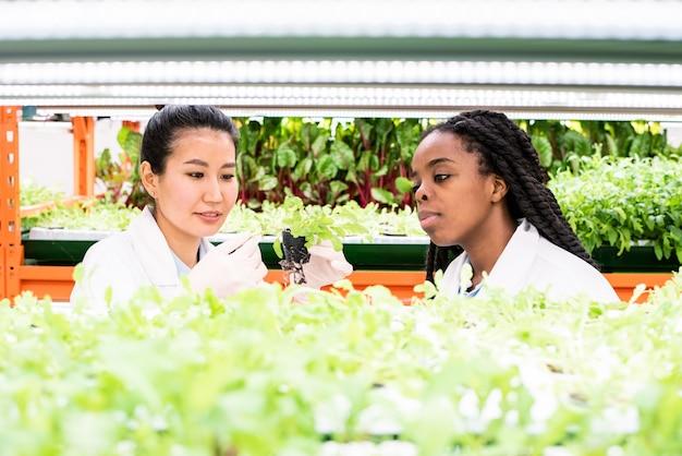 Femme asiatique gantée en blanchon tenant des semis verts, à la recherche de petites feuilles et à discuter d'une nouvelle sorte de plante avec un collègue africain